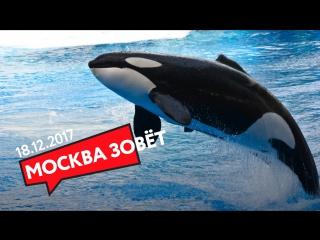 18.12 | МОСКВА ЗОВЁТ в Москвариум!
