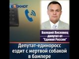 В Таганроге сбивший собаку водитель неск...сте с ней (240p).mp4