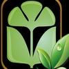 САЖЕНЦЫ Фрукты Овощи Ягода |Институт Садоводства