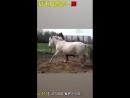 Не лезьте к коню когда он не в духе