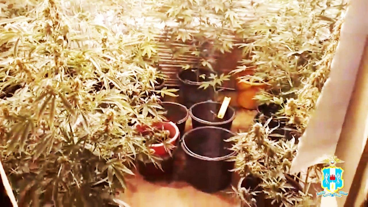 Под Таганрогом 48-летний мужчина в домашних условиях выращивал коноплю в горшках