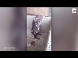 Крыса «принимает душ» в раковине