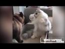 Подборка смешных котиков VIDEO ВАРЕНЬЕ
