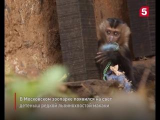 Пополнение в Московском зоопарке