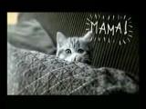 Музыка из рекламы Whiskas - Заботливый как мама (Россия)