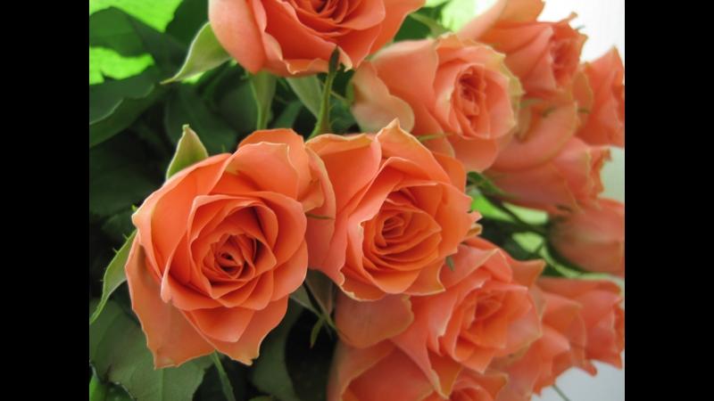 Оленька с днём рождения с днём пятилепестковой розы