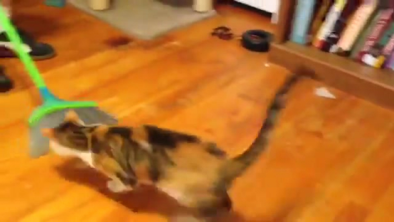 This cat loves to be swipped