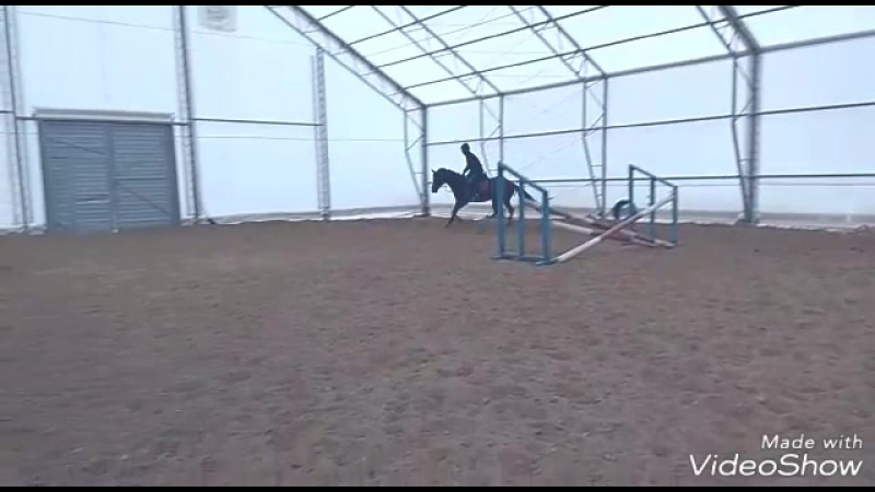 Mobius, Thoroughbred horse