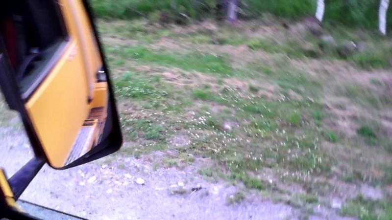 медведь у дороги2