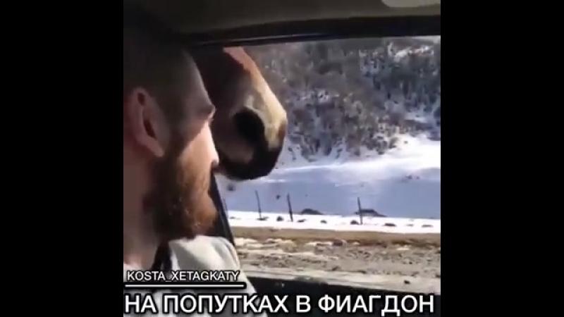 Конь автостопщик