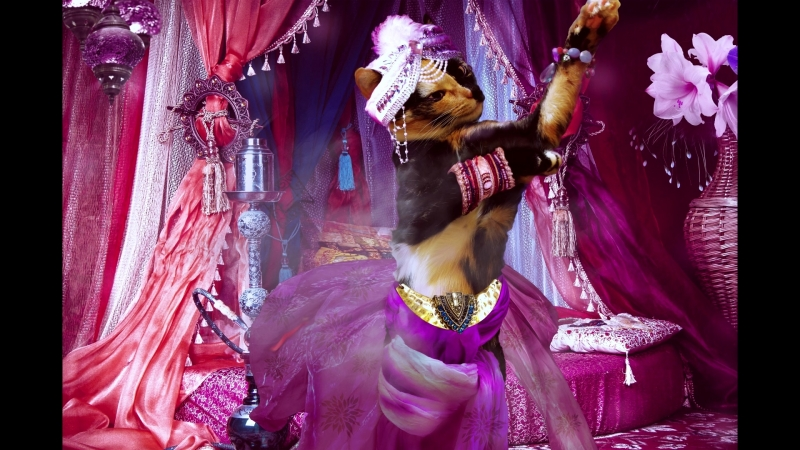 Розовый танец на Востоке