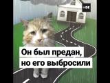 Спасение кота Тоби