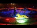 Тигры.Артур и Карина Багдасаровы