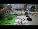 Ընթրիք Հավի Միս ԵՎ Սունկով Курица в Духовке с Грибами Chicken in the Oven with Mushrooms