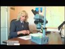В Кемеровской области подтвержден карантин по сорняку повилике