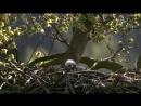 Дикая природа Германии 01 Шпревальд Познавательный животные 2011
