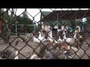 Лавка вкусов (птицеферма)