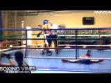 BOXING_VINES ( by kirakosyan ) (Boxing Vines) l vk.com/boxingvines