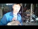 Ежи для прополки картошки для трактора Т 25