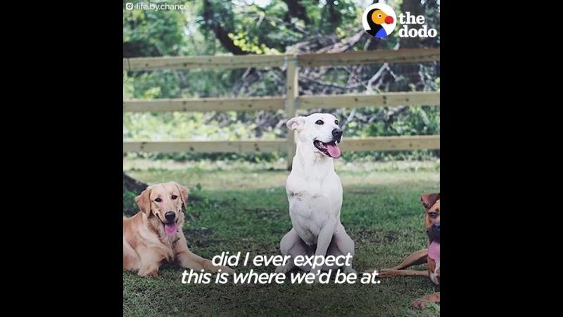 Эта пара взяла в свой дом трех очень особенных собак!