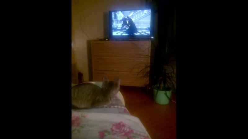 Моя кошка 🐱 смотрит матрицу😁