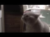 Кот очень смешно говорит- ' открой дверь! ' - cat asks to open the door -D.mp4