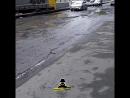 Качественные барнаульские дороги (Инцидент Барнаул)