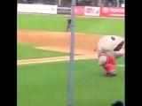 Ужасы на бейсбольном поле!