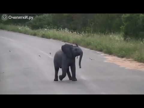Беззаботный слонёнок