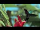Очень красивое видео природы
