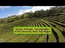 20 Azores Portugal Азорские острова Tea plantation at Cha Gorreana Maia San Miguel
