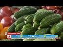 Чим відрізняються органічно вирощені огірки від звичайних