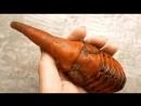 Развитие гигантского жука Геркулеса .