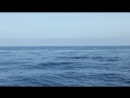 Дельфины в Атлантическом океане