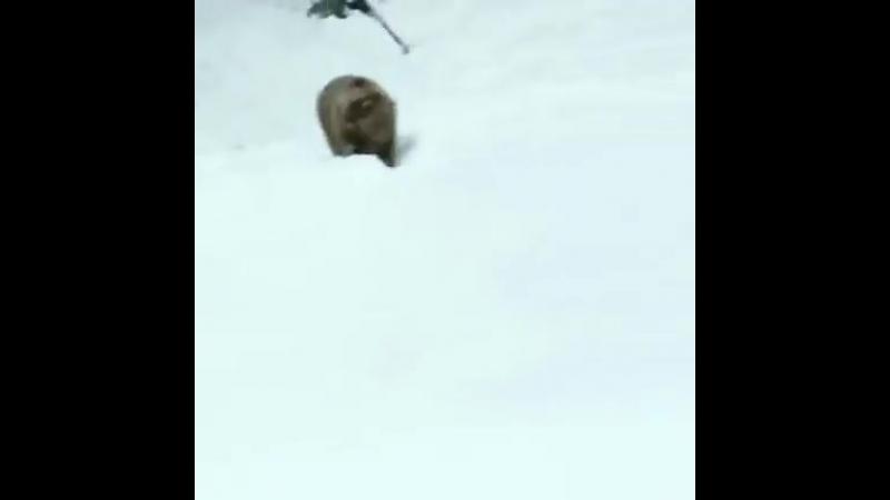 Медведь нападает на людей. ШОК