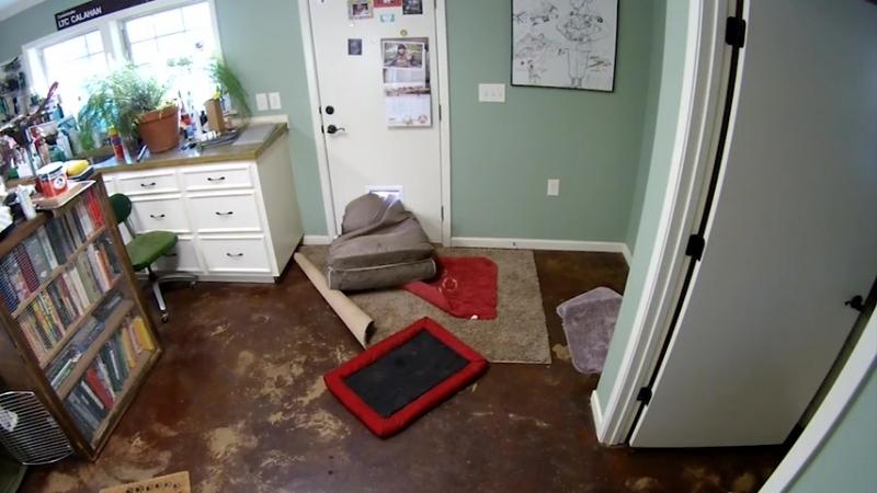 Боксёр Бэлла утащила кровать всад что бы не лежать на земле | Ещё много интересного видео topgav.ru/threads/interesnoe-