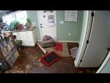 Боксёр Бэлла утащила кровать всад что бы не лежать на земле | Ещё много интересного видео https://topgav.ru/threads/interesnoe-