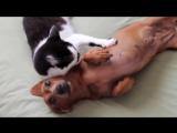 Кошка помогает собаке справиться с эмоциями и успокоиться