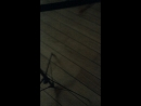 13 05 18 Подарок для Стерха 3 Владимир Шейнин Игорь Лунев Павел Федосов Богдан Лавриненко и Маргарита Ильина