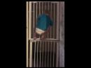 На свободу с чистой совестью (Инцидент Барнаул)