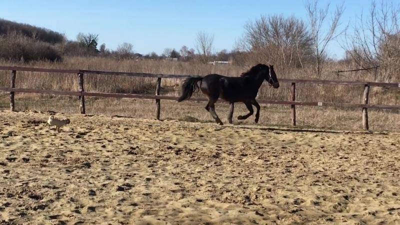 лошадка центра Росток жизни Сальва