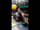 Komu je v těchto dnech vedro ať si pořídí slona