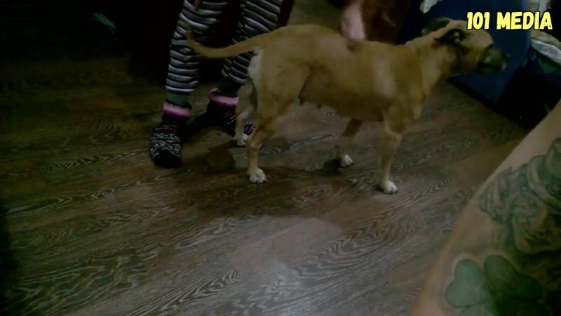 Prikoly_pro_sobak_2017_Nu_ochen_Smeshnye_sobaki__Prikoly_s_sobakami__Sobaki_Funny_Dogs_2017(MosCatalogue.ne