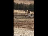 Cricket gives Corgi pony rides