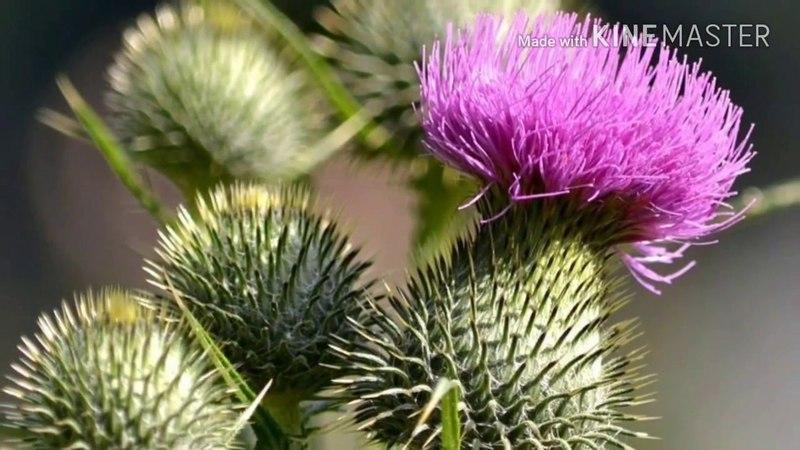 Топ 30. Самых съедобных растений.