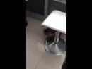 Видеопривет 😍 Олса