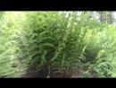 В Мамайских джунглях
