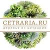 Деревья из Цетрарии