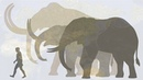 Hendrik Poinar Bring back the woolly mammoth