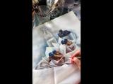 Muffin&blueberries
